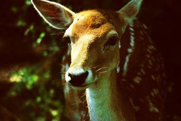 oh deer by KatiBear