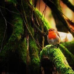 Robin Adventures by KatiBear