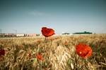 Amapolas 02 by SuperStar-Stock