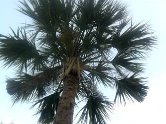 Palm Tree 2 by Rachel827123