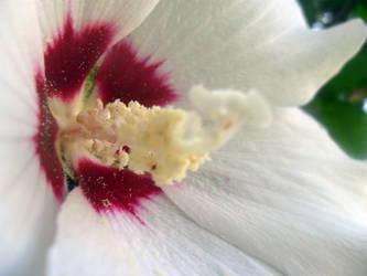 White Flower 2 by Rachel827123