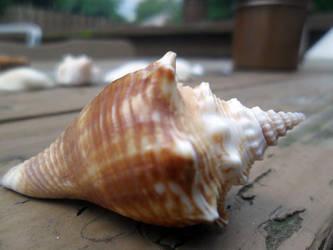 Sea shell by Rachel827123