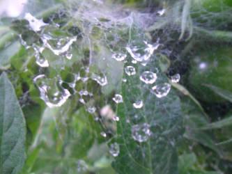 Wet spider web by Rachel827123