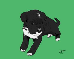 Dexter Puppy by BlackSnowComics