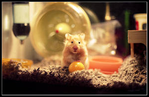 Portrait of a Hamster by shubat