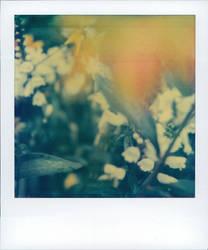 june garden by Alteru