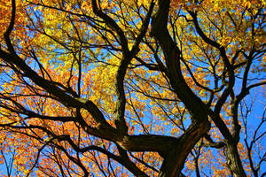 Fall Foliage 3193721 by StockProject1