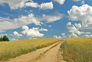 Country Path 4427158 by StockProject1