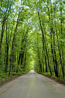 Forest Road 4929939 by StockProject1