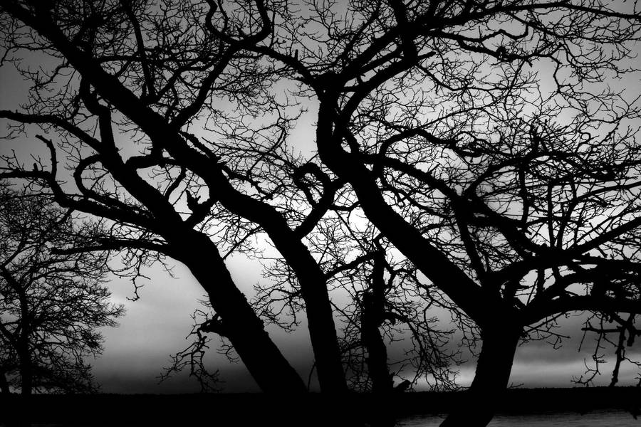 Tree Silhouette 7297988 by StockProject1