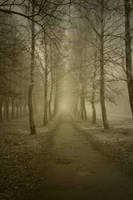 Eerie Passage 10554354 by StockProject1