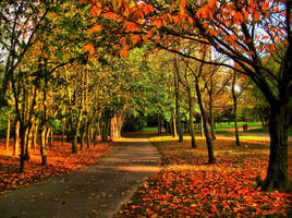 Red Autumn 13604783 by StockProject1