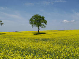 Lone Tree 14487100 by StockProject1