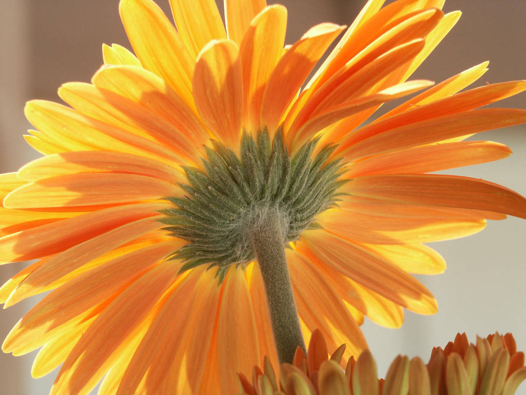 Yellow Flower 15337638 by StockProject1