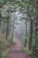 Foggy Path 16359661 by StockProject1