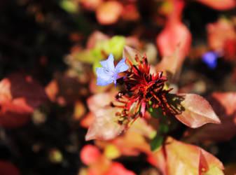 Autumn contrast by Lyricanna