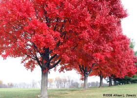 RED TREES by Prairie-Bayou