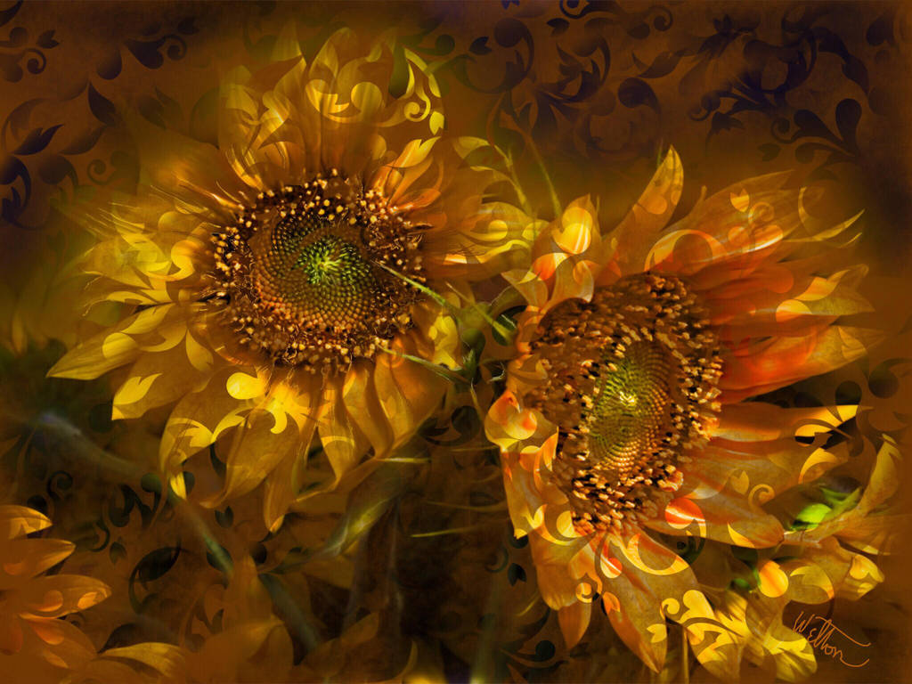 Sunflowers  by laughingtube