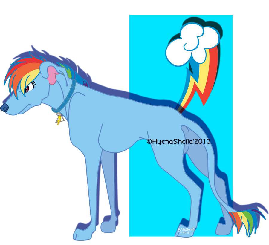 Rainbow Dash As A Dog By Star X On Deviantart