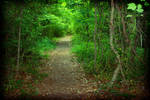 Swamp Trail by druideye