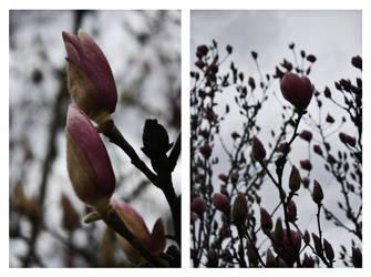 Spring Pinks by druideye