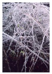 Icy Vines 1 by druideye
