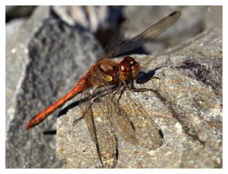 dragonfly'02 by bagoon