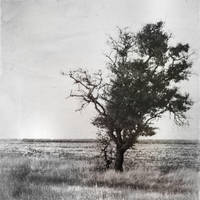 tree by amsterdam-jazz