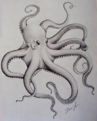 Octopus by THE-RAttie