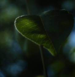 Leaf by Saishuu-Karasu