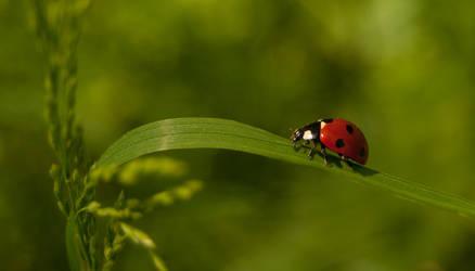 Ladybug by Saishuu-Karasu