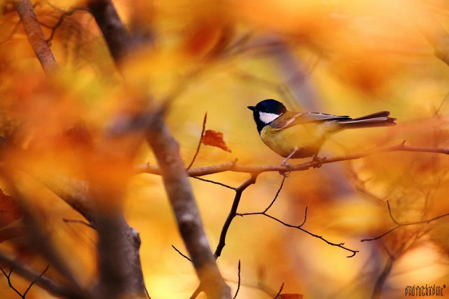 Autumn by Misslulu07
