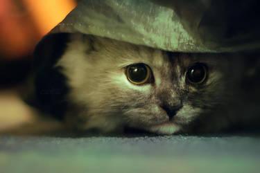 .: Hiding :. by Rare-Pearl