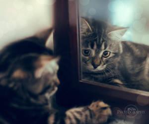 .: Mirror mirror :. by Rare-Pearl