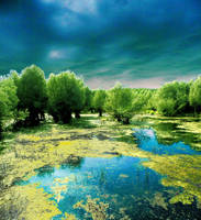 Pond by gulgulass