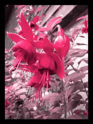 Pink Pink Flowers by PrincessTia