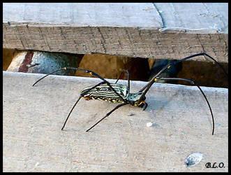 Spider by Alpha0mega