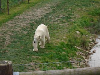 Polar Bears 007 by Vande-Bot