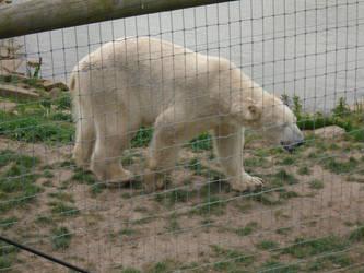 Polar Bears 008 by Vande-Bot