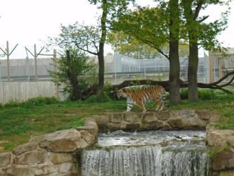 Tiger 007 by Vande-Bot