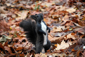 do the squirrel by iuli72an