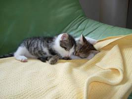 Sweet baby kittys by Kittychen226