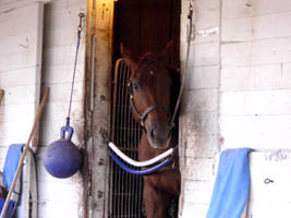Stable by MollyMay335