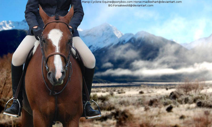 In the Mountains(Horse Picture) by MollyMay335