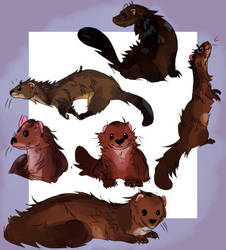 mink study by minkmaid