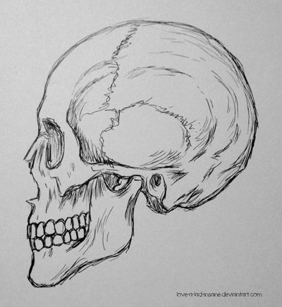 Skull Sketch 1 by love-a-lad-insane
