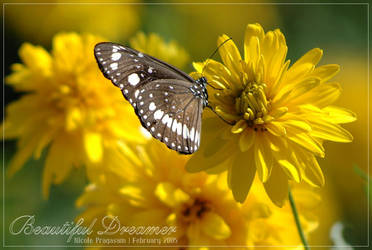 Beautiful Dreamer by nicoleP