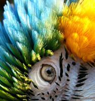 Rainbows eye by SynthetikFlesh