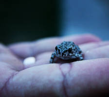 little frog 1 by Ketike