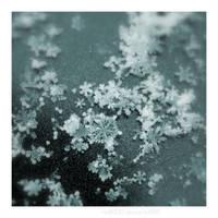 Snowflakes by nnIKOO